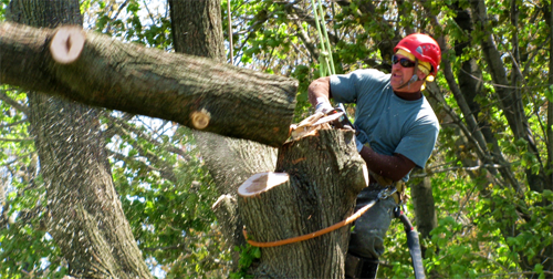 Edison Tree Removal Serving Edison Surrounding Areas