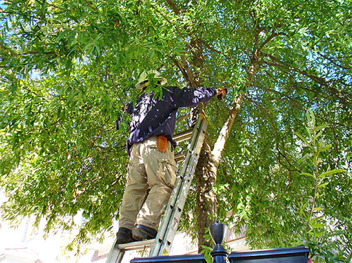 Edison Tree Service Tree Removal Tree Trimming